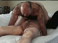 Super hairy bear blowjob