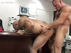 Body building bears fuck in office