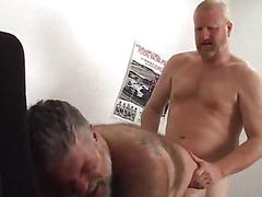 Bear sex in a tiny office